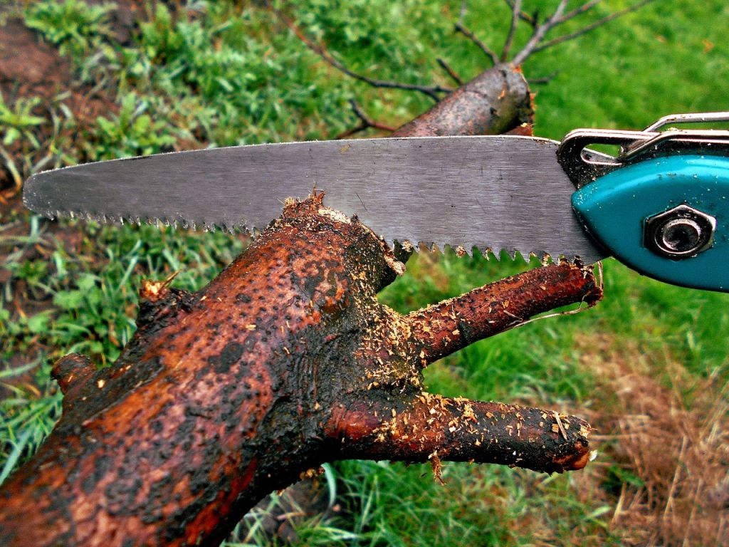 couper scier branche